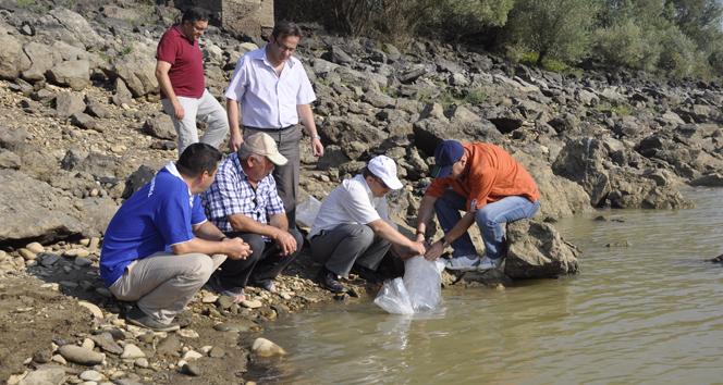 Göletlere 30 bin balık bırakıldı