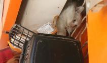 Kepenk arasında kedi kurtarma operasyonu