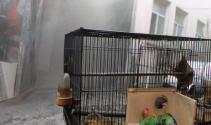 Yanan iş yerinde ölen kuşlarına ağladı