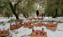 Hakkari'de kar kış meyve ağaçlarını vurdu