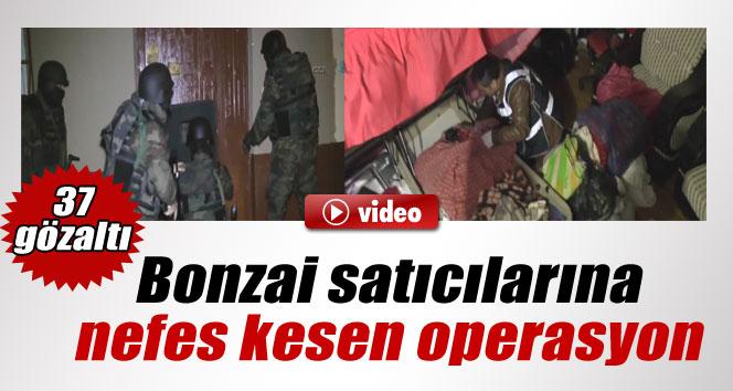 Bursa'da bonzai operasyonu: 37 gözaltı