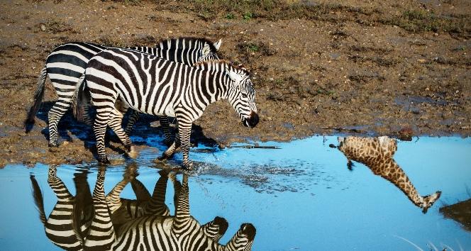 Bu kareler Afrika'dan değil Türkiye'denafrika,hayvanat bahçesi,İzmir