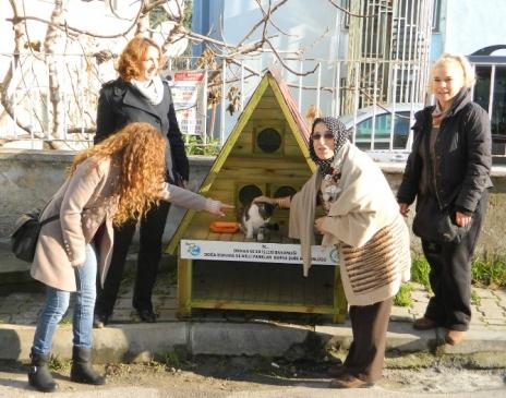Mudanya'daki Kediler Villa Tepi Evlerde Kalacak